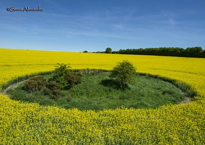 Willoughby Hedge, Wilts | 8th May 2018 | Oilseed Rape | TU3