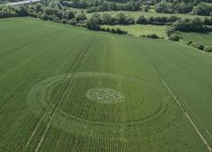 Baunton, Glos |  2nd June 2018 | Wheat | L3