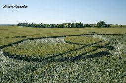 Yarnbury Castle, Wilts | 24th June 2018 | Wheat Low5