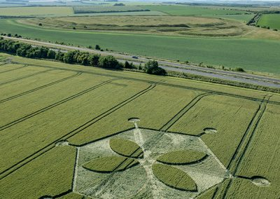 Yarnbury Castle, Wilts   24th June 2018   Wheat L