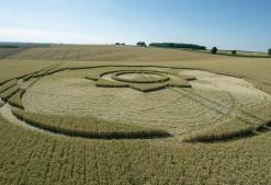 Longwood Warren, Hants   10th July 2018   Long-eared Wheat Low21