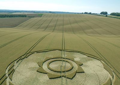 Longwood Warren, Hants | 10th July 2018 | Long-eared Wheat L2