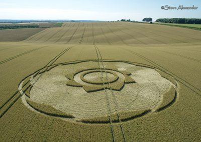 Longwood Warren, Hants | 10th July 2018 | Long-eared Wheat Low
