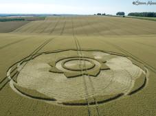 Longwood Warren, Hants   10th July 2018   Long-eared Wheat Low
