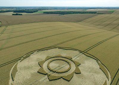 Longwood Warren, Hants | 10th July 2018 | Long-eared Wheat L