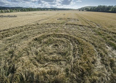 Norridge Wood, nr Warminster, Wilts | 14th August 2018 | Barley (?) Low4