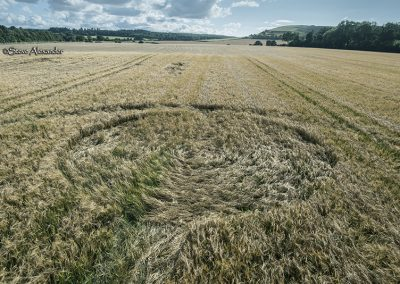 Norridge Wood, nr Warminster, Wilts | 14th August 2018 | Barley (?) Low5