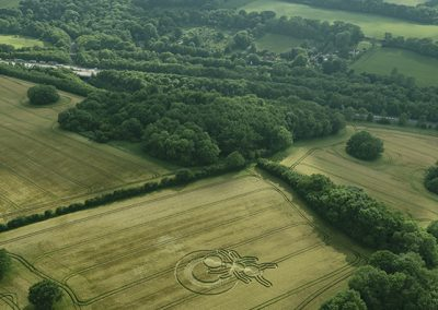 Sparticles Wood, nr Netherne-on-the-Hill Surrey | 21st June 2019 | Barley | HL