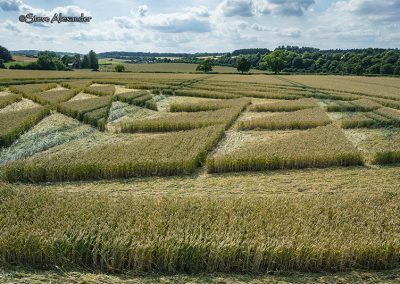 Fulley Wood, nr Tichborne, Hants | 16th July 2019 | Wheat | Low3