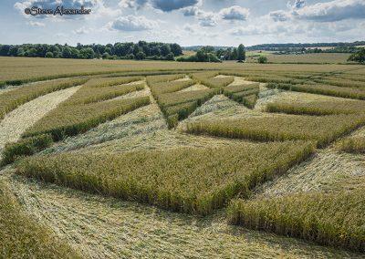 Fulley Wood, nr Tichborne, Hants   16th July 2019   Wheat   Low4