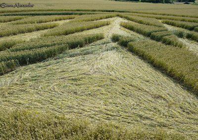 Fulley Wood, nr Tichborne, Hants   16th July 2019   Wheat   Low6