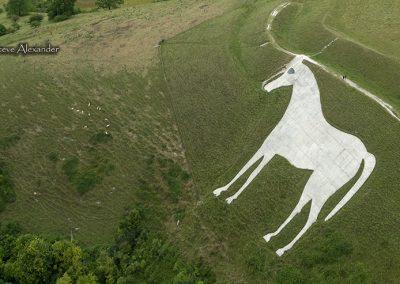Westbury White Horse, Bratton Camp, Wilts | 20th July 2019  | Wheat | WH