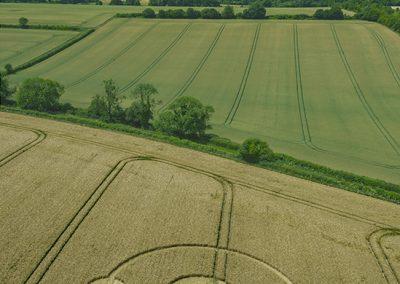 Bishops Sutton, Hants | 29th June 2019 | Barley | L-1