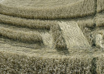 Etchilhampton, Wilts | 20th August 2019 | Wheat | CLEDG