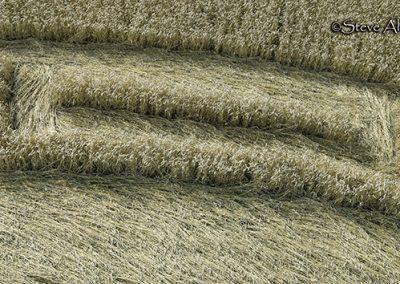 Etchilhampton, Wilts | 20th August 2019 | Wheat | CLDT