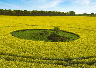 Crop Circles 2020 | Pre-season Info