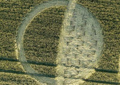 Luxenborough, nr. Stonehenge, Wilts | 16th July 2020 | Wheat |  CLT
