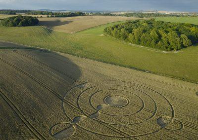 Luxenborough, nr. Stonehenge, Wilts | 16th July 2020 | Wheat |  L2T