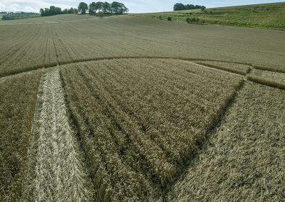 Chirton Bottom,  Chirton, Wilts |  5th Sept 2020 | Wheat | Low5