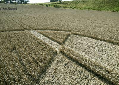 Chirton Bottom,  Chirton, Wilts |  5th Sept 2020 | Wheat | Low6
