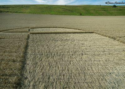 Chirton Bottom,  Chirton, Wilts |  5th Sept 2020 | Wheat | Low7