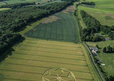 Fulley Wood, Hants |  21st June 2021 | Barley | HL
