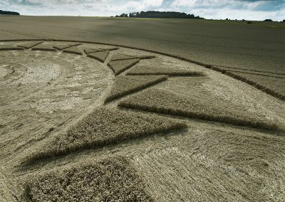 Roundway Hill, Wilts | 15th August 2021 | Wheat | Low6/SA