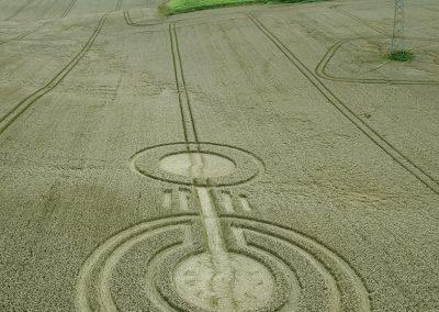 Watership Down, Sydmonton, Hants    11th August 2021   Wheat   L